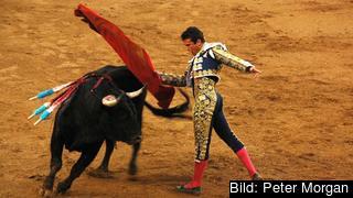 Tjurfäktning i Spanien. Arkivbild.